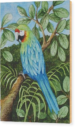 Parrot Wood Print by Katherine Young-Beck