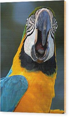 Parrot Squawking Wood Print by Carolyn Marshall