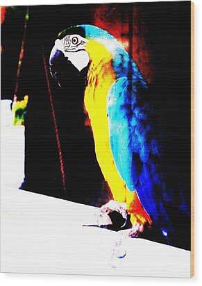 Parrot Wood Print by Todd Sherlock
