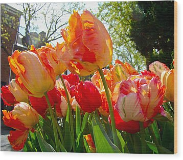 Parrot Tulips In Philadelphia Wood Print by Mother Nature
