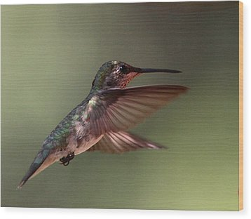 Partial Shade For The Ruby- Throated Hummingbird Wood Print by Travis Truelove