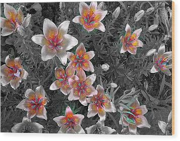 Pasqueflower In Silver Wood Print