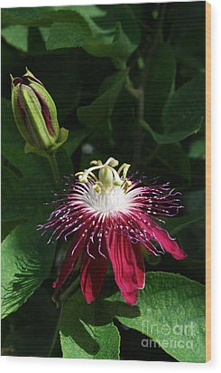 Passion Flower Wood Print by Eva Kaufman