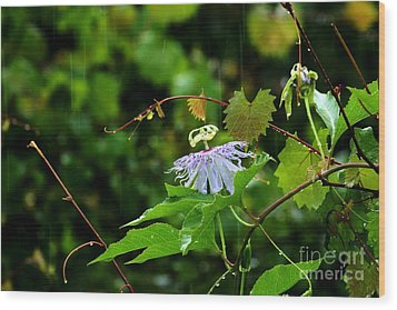 Passion Flower In The Rain Wood Print by Theresa Willingham
