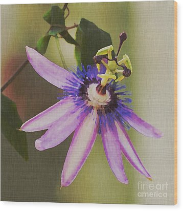 Passion Flower Wood Print by Artist and Photographer Laura Wrede