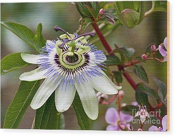 Passion Flower Wood Print by Teresa Zieba