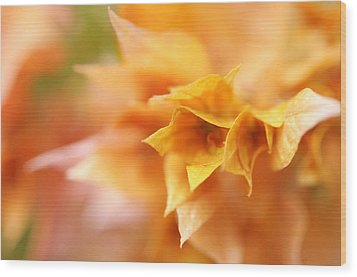 Passion For Flowers. Orange Delight Wood Print by Jenny Rainbow