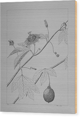 Wood Print featuring the drawing Passionflower Vine by Daniel Reed