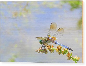 Wood Print featuring the photograph Pastel Dragonfly by Deborah Smith