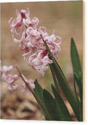 Pastel Flowers Wood Print by Coby Cooper