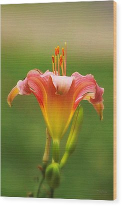 Pastel Lilyform Wood Print by Deborah  Crew-Johnson