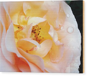 Pastel Rose Wood Print by Kaye Menner