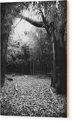 Patch Of Light Wood Print by John Rizzuto