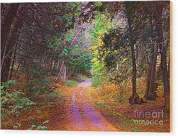 Path In The Woods Wood Print by Anne Raczkowski