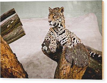 Patient Jaguar Wood Print by Ezequiel Rodriguez Baudo