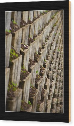 Pattern In The Carpark Wood Print by Miguel Capelo