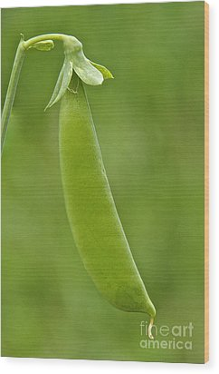 Pea Pod Wood Print by Sean Griffin