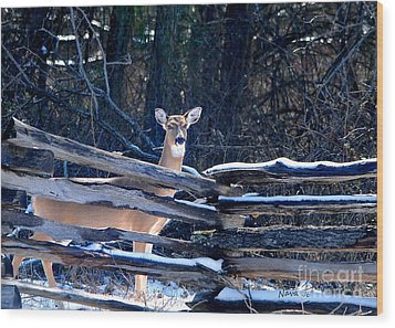 Wood Print featuring the photograph Pea Ridge Battlefield Deer by Nava Thompson