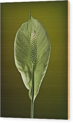 Peace Lilly Wood Print