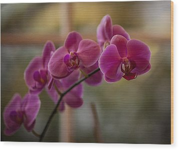Peaceful Orchids Wood Print by Mike Reid