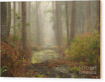 Peaceful Pathway Wood Print by Jill Smith
