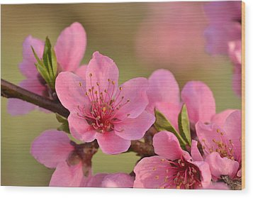 Peach Beautiful Wood Print