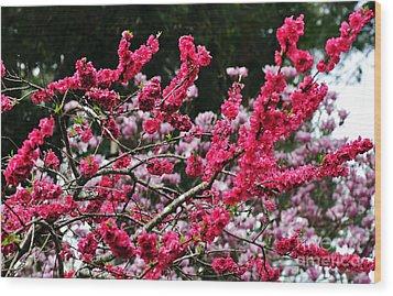 Peach Blossom Wood Print by Kaye Menner