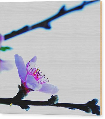 Wood Print featuring the photograph Peach Blossom by Puzzles Shum