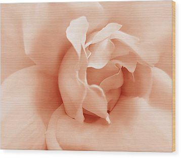 Peach Pastel Rose Flower Wood Print by Jennie Marie Schell