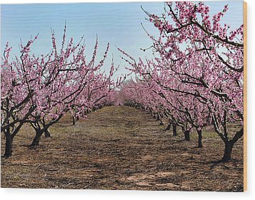 Peaches To Be Wood Print by Skip Willits