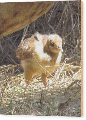 Wood Print featuring the photograph Peachick by Bonnie Muir