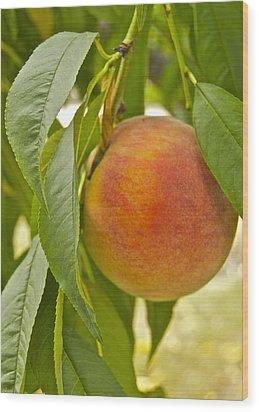 Peachy 2903 Wood Print by Michael Peychich