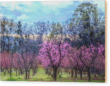 Wood Print featuring the photograph Peachy Blossum Scene2 by William Havle