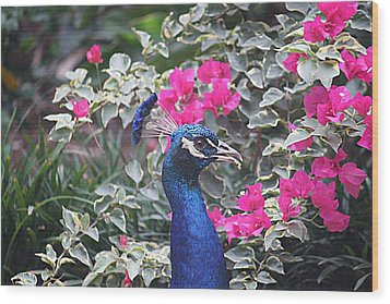 Wood Print featuring the photograph Peacock And Bouganvillas by Donna Smith