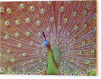 Peacock Bloom Wood Print by Paul Svensen