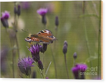 Peacock Butterfly On Knapweed Wood Print by Clare Bambers