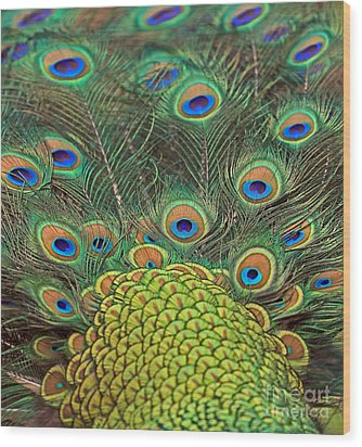 Peacock  Detail Wood Print by Larry Nieland