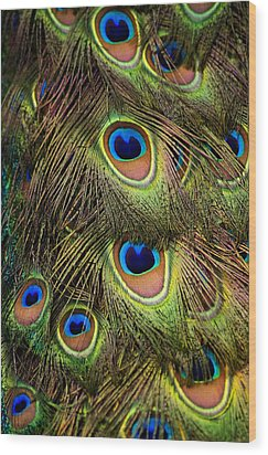 Peacock Feathers Wood Print by Navid Baraty / Getty Images