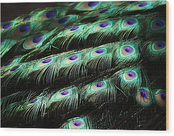 Peacock Feathers Wood Print by Paulette Thomas