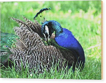 Peacock Wood Print by Kathy Gibbons