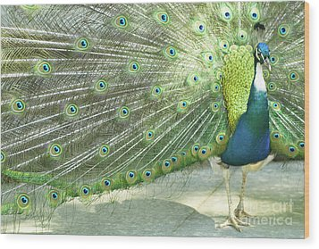 Peacock Wood Print by Pit Hermann