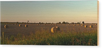 Peanut Field Bales At Dawn 1 Wood Print by Douglas Barnett