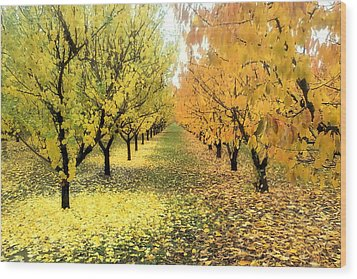 Wood Print featuring the photograph Pear Orchard In Fall by Katie Wing Vigil