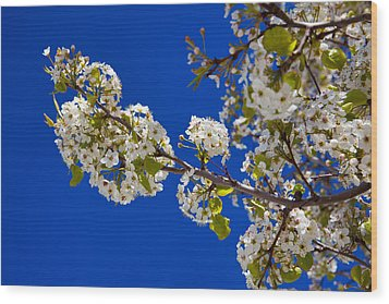 Pear Spring Wood Print by Chad Dutson