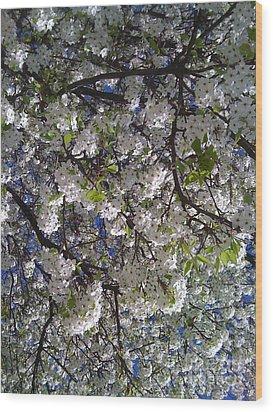 Pear Tree Blossoms Wood Print