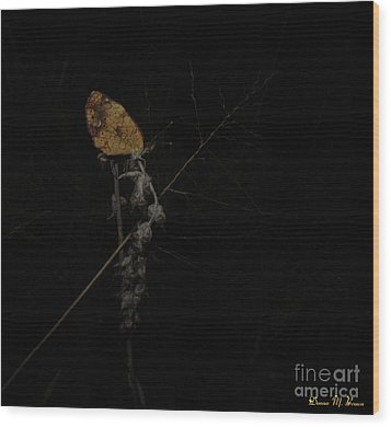Pearly Crescentspot Butterfly Wood Print by Donna Brown