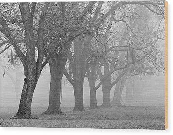 Pecan Grove Wood Print