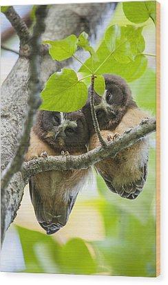 Peek-a-boo Fledglings Wood Print by Tim Grams