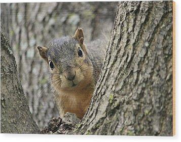 Peek A Boo Squirrel Wood Print by Rosanne Jordan