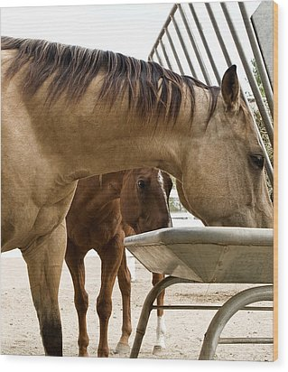 Wood Print featuring the photograph Peeking Pony by Lorraine Devon Wilke